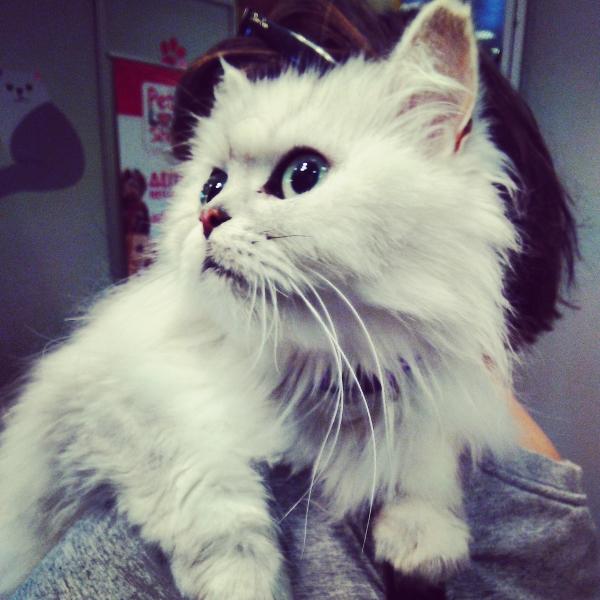 καλλωπισμός γάτας